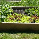 Flatbush CommUNITY Garden kicks off!