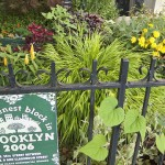 The Greenest Block in Brooklyn to be honored at this Sunday's Greening Flatbush!!!