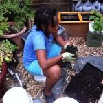 Sustainable Flatbush kicks off its Urban Farm and Garden season with a Meetup on April 24th!