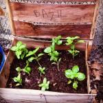 Garden Update: August!