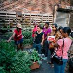Two FREE Herbal Workshops on August 17!