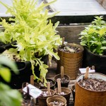 Winter Gardening Herbal Workshop!