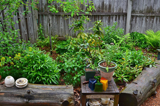 Flatbush Gardener's Native Plant Oasis